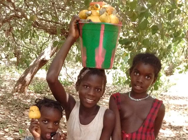 Kinder Cashew 1