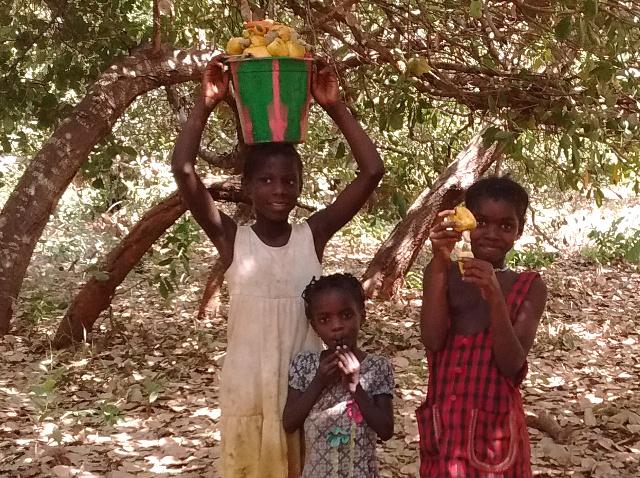 Kinder Cashew 2